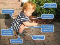 grok squat